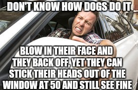DON'T KNOW HOW DOGS DO IT BLOW IN THEIR FACE AND THEY BACK OFF, YET THEY CAN STICK THEIR HEADS OUT OF THE WINDOW AT 50 AND STILL SEE FINE | made w/ Imgflip meme maker