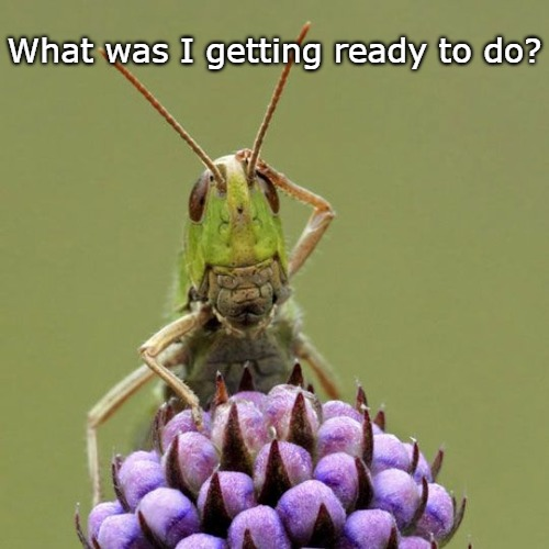 What was I getting ready to do? | image tagged in funny,forgetful,humor,grasshopper | made w/ Imgflip meme maker