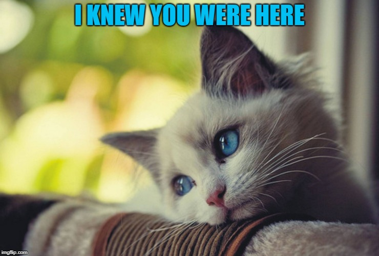 Lonely Cat | I KNEW YOU WERE HERE | image tagged in lonely cat | made w/ Imgflip meme maker