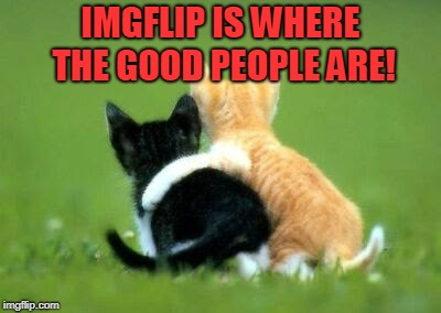 Cats Friends | IMGFLIP IS WHERE THE GOOD PEOPLE ARE! | image tagged in cats friends | made w/ Imgflip meme maker