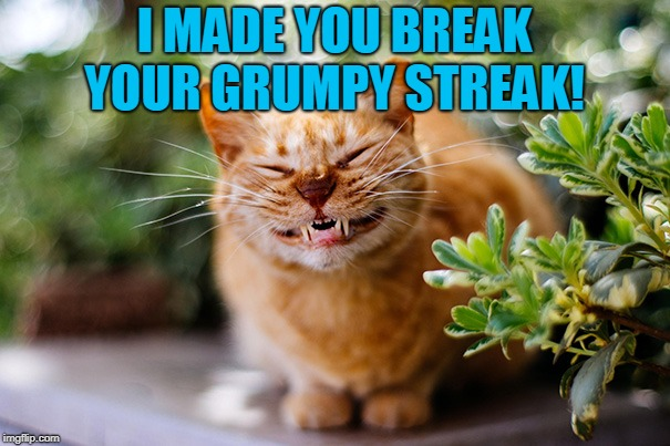 Cat smiling | I MADE YOU BREAK YOUR GRUMPY STREAK! | image tagged in cat smiling | made w/ Imgflip meme maker