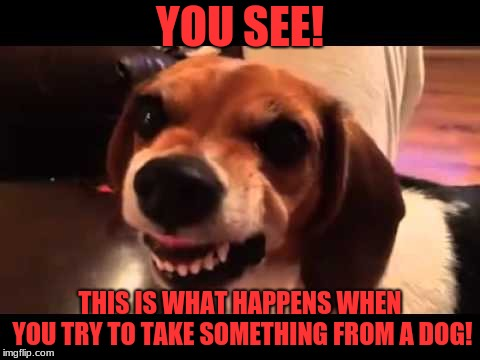Grumpy Beagle don't like selfies | YOU SEE! THIS IS WHAT HAPPENS WHEN YOU TRY TO TAKE SOMETHING FROM A DOG! | image tagged in grumpy beagle don't like selfies | made w/ Imgflip meme maker