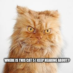 WHERE IS THIS CAT 5 I KEEP HEARING ABOUT? | image tagged in mean cat | made w/ Imgflip meme maker