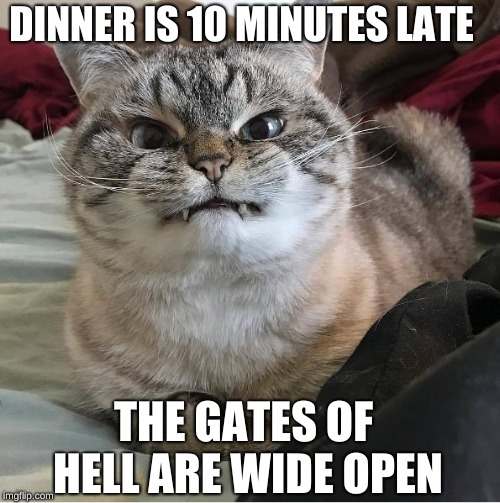 My CAT  | DINNER IS 10 MINUTES LATE THE GATES OF HELL ARE WIDE OPEN | image tagged in lolcats | made w/ Imgflip meme maker
