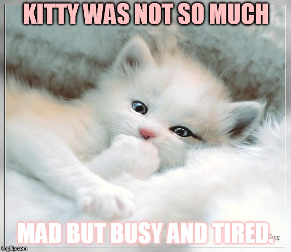 KITTY WAS NOT SO MUCH MAD BUT BUSY AND TIRED. | made w/ Imgflip meme maker