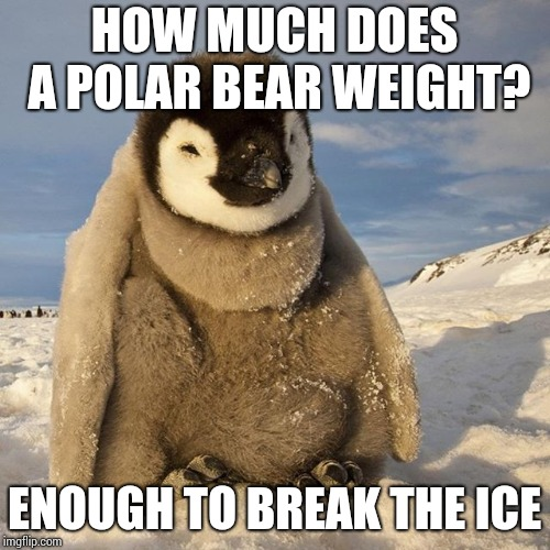 HOW MUCH DOES A POLAR BEAR WEIGHT? ENOUGH TO BREAK THE ICE | made w/ Imgflip meme maker