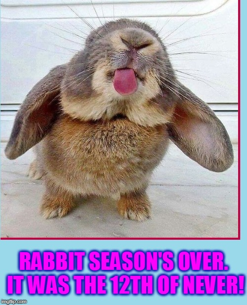 Thumper's Little Brother: Humper | RABBIT SEASON'S OVER. IT WAS THE 12TH OF NEVER! | image tagged in vince vance,rabbits,bunnies,cute bunny,hunting season,rabbit sticks out tongue | made w/ Imgflip meme maker