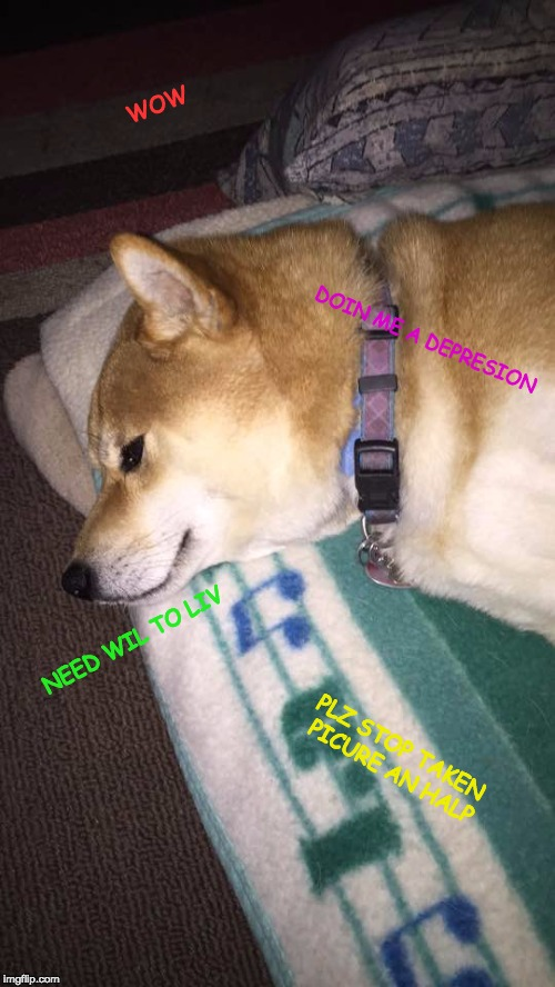 WOW DOIN ME A DEPRESION NEED WIL TO LIV PLZ STOP TAKEN PICURE AN HALP | image tagged in depressed doge | made w/ Imgflip meme maker
