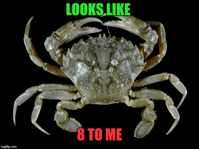 LOOKS LIKE 8 TO ME | made w/ Imgflip meme maker