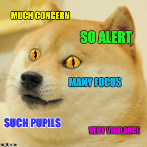 MUCH CONCERN SO ALERT MANY FOCUS SUCH PUPILS VERY VIGILANCE | made w/ Imgflip meme maker