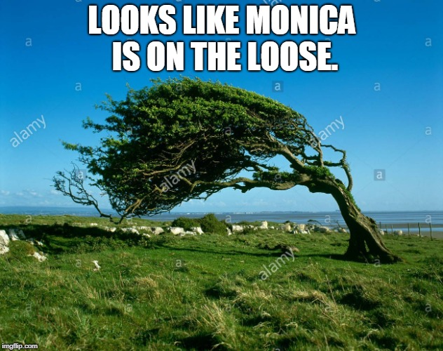 wind | LOOKS LIKE MONICA IS ON THE LOOSE. | image tagged in wind | made w/ Imgflip meme maker