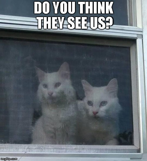 Kitty Spies | DO YOU THINK THEY SEE US? | image tagged in cats,cute,spies,kitties,kitty,white cat | made w/ Imgflip meme maker