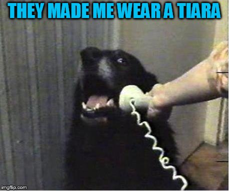 Yes this is dog | THEY MADE ME WEAR A TIARA | image tagged in yes this is dog | made w/ Imgflip meme maker