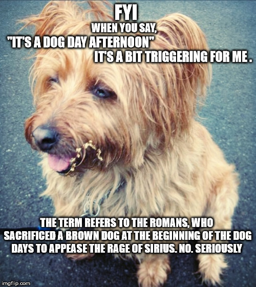 FYI THE TERM REFERS TO THE ROMANS, WHO SACRIFICED A BROWN DOG AT THE BEGINNING OF THE DOG DAYS TO APPEASE THE RAGE OF SIRIUS. NO. SERIOUSLY  | image tagged in wiley doofy | made w/ Imgflip meme maker