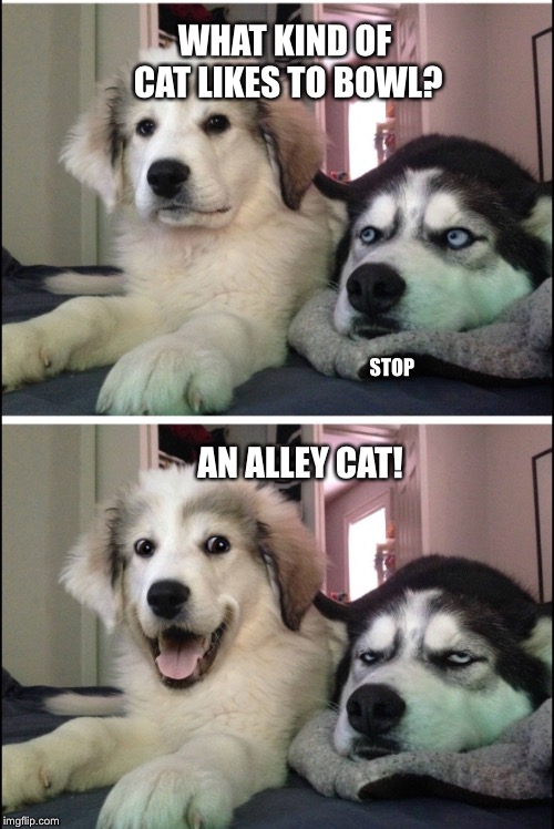 Bad joke huskies | WHAT KIND OF CAT LIKES TO BOWL? AN ALLEY CAT! STOP | image tagged in bad joke huskies | made w/ Imgflip meme maker