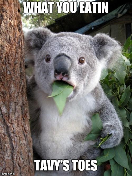 Surprised Koala Meme | WHAT YOU EATIN TAVY'S TOES | image tagged in memes,surprised koala | made w/ Imgflip meme maker