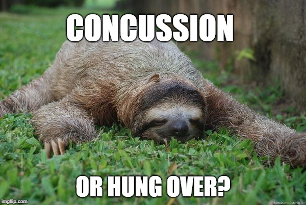 Sleeping sloth | CONCUSSION OR HUNG OVER? | image tagged in sleeping sloth | made w/ Imgflip meme maker