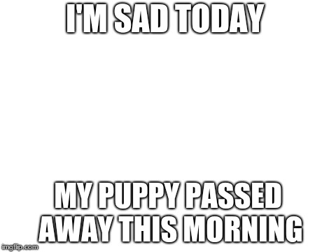 blank white template | I'M SAD TODAY MY PUPPY PASSED AWAY THIS MORNING | image tagged in blank white template | made w/ Imgflip meme maker