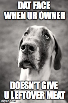 DAT FACE WHEN UR OWNER DOESN'T GIVE U LEFTOVER MEAT | image tagged in sad great dane | made w/ Imgflip meme maker