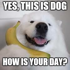 Yes, This is Dog | YES, THIS IS DOG HOW IS YOUR DAY? | image tagged in yes,this is dog | made w/ Imgflip meme maker