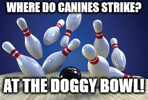 Bowling Ball | WHERE DO CANINES STRIKE? AT THE DOGGY BOWL! | image tagged in bowling ball | made w/ Imgflip meme maker