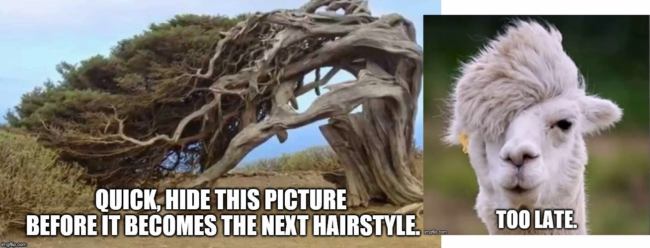 What should be the title? | . | image tagged in nature,hair | made w/ Imgflip meme maker