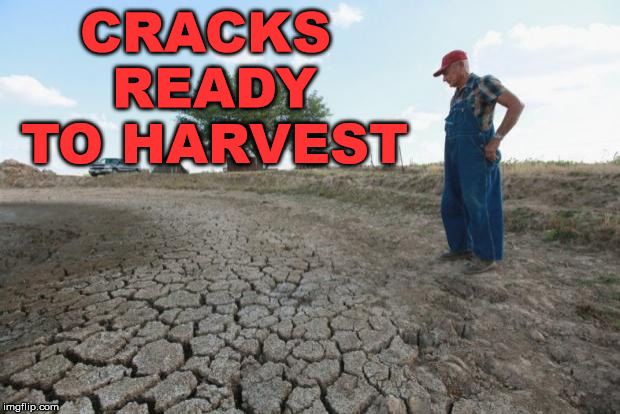 I guess he is a crack dealer. | CRACKS READY TO HARVEST | image tagged in drought farmer,memes,funny,crack,crack head,addict | made w/ Imgflip meme maker