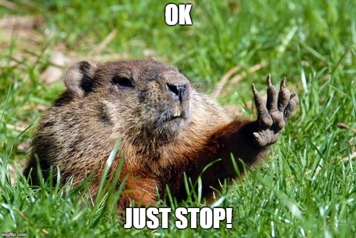Just Stop Groundhog | OK JUST STOP! | image tagged in just stop groundhog | made w/ Imgflip meme maker