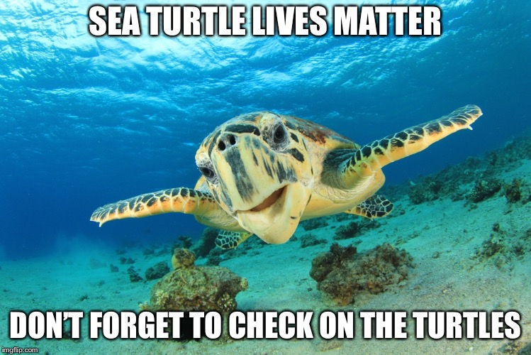 Sea Turtle | SEA TURTLE LIVES MATTER DON'T FORGET TO CHECK ON THE TURTLES | image tagged in sea turtle | made w/ Imgflip meme maker