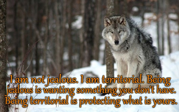 Wolf Saying I Am Not Jealous I Am Territorial | I am not jealous. I am territorial. Being jealous is wanting something you don't have. Being territorial is protecting what is yours. | image tagged in wolf,wolves,native american,native americans,tribe,indians | made w/ Imgflip meme maker