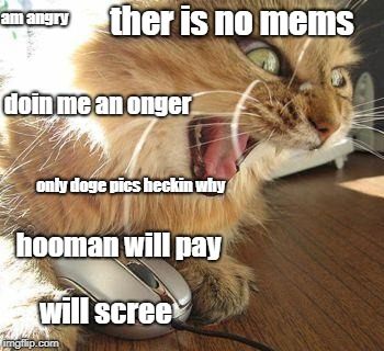 angry cat | ther is no mems will scree am angry hooman will pay only doge pics heckin why doin me an onger | image tagged in angry cat | made w/ Imgflip meme maker