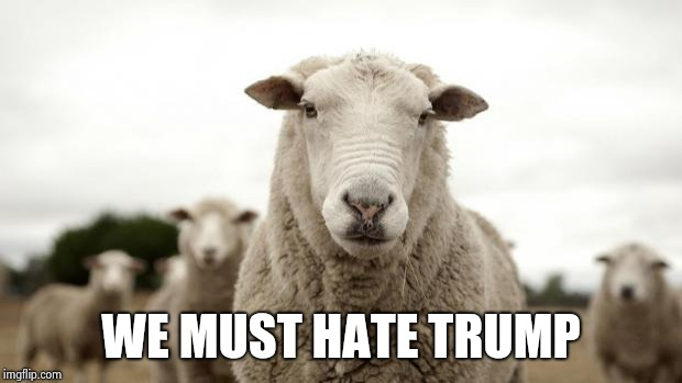 Sheep | WE MUST HATE TRUMP | image tagged in sheep | made w/ Imgflip meme maker