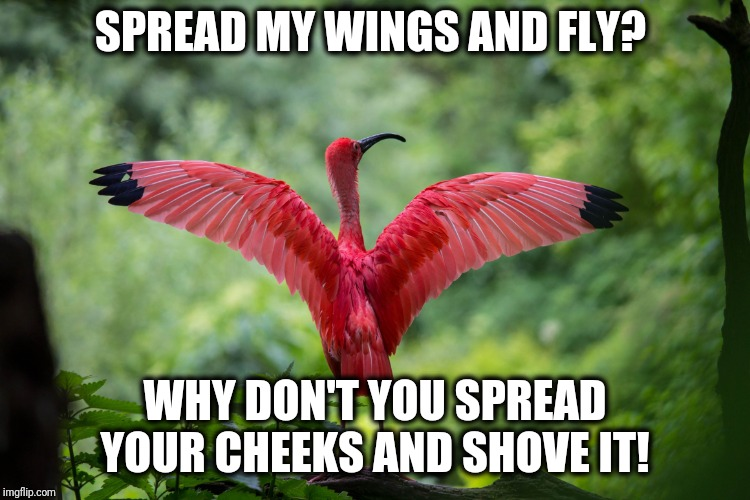 Spread Em | SPREAD MY WINGS AND FLY? WHY DON'T YOU SPREAD YOUR CHEEKS AND SHOVE IT! | image tagged in flamingo,funny,sayings,bird,sarcasm | made w/ Imgflip meme maker