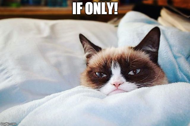 grumpy cat bed | IF ONLY! | image tagged in grumpy cat bed | made w/ Imgflip meme maker
