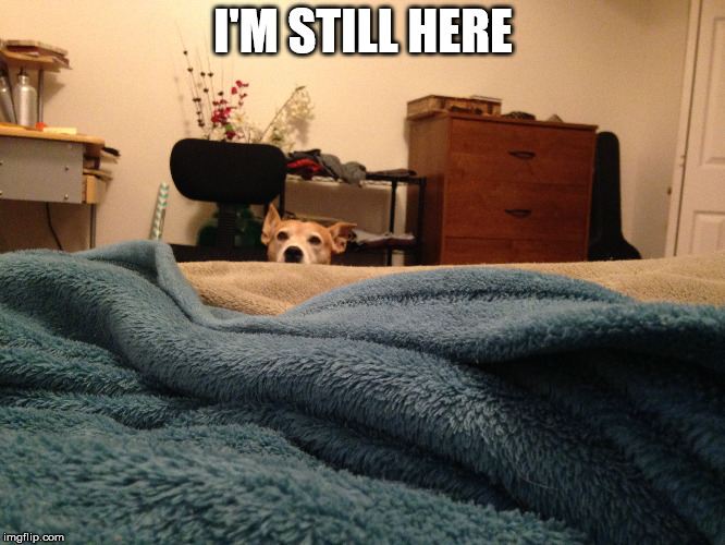 I'm still here | I'M STILL HERE | image tagged in dogs,funny,watching,creepy,need attention,waiting | made w/ Imgflip meme maker