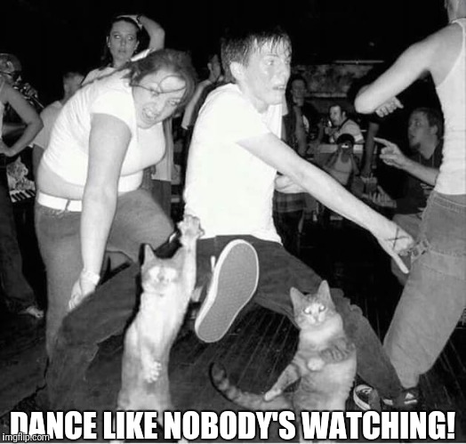 Dance like nobody's watching | DANCE LIKE NOBODY'S WATCHING! | image tagged in funny cats,cats dancing,dance like nobody's watching | made w/ Imgflip meme maker