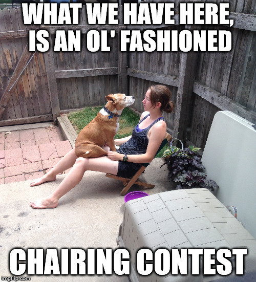 Chairing contest | WHAT WE HAVE HERE, IS AN OL' FASHIONED CHAIRING CONTEST | image tagged in dogs,funny,silly,sitting on lap,staring contest | made w/ Imgflip meme maker