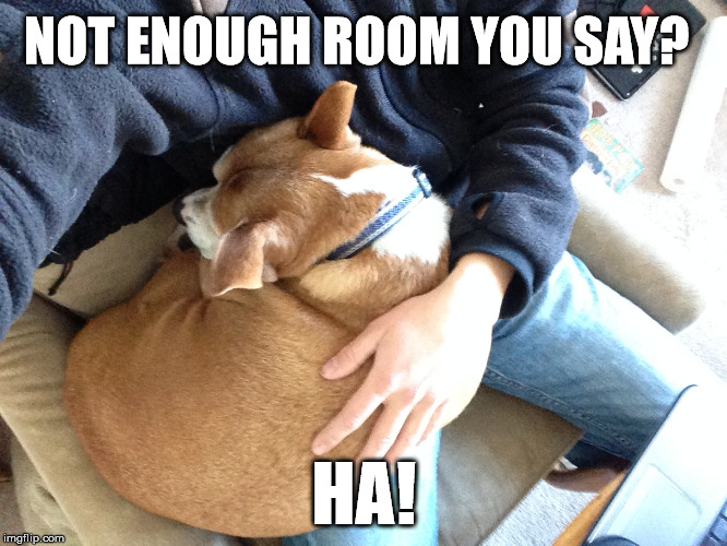 Always Room To Cuddle | NOT ENOUGH ROOM YOU SAY? HA! | image tagged in dogs,cuddle,cramped,not enough room,cute,snuggle | made w/ Imgflip meme maker