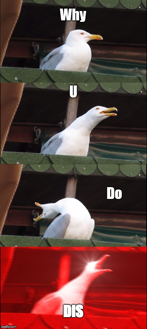 Inhaling Seagull Meme | Why U Do DIS | image tagged in memes,inhaling seagull | made w/ Imgflip meme maker