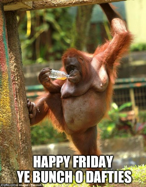 sexy orangutan | HAPPY FRIDAY YE BUNCH O DAFTIES | image tagged in sexy orangutan | made w/ Imgflip meme maker