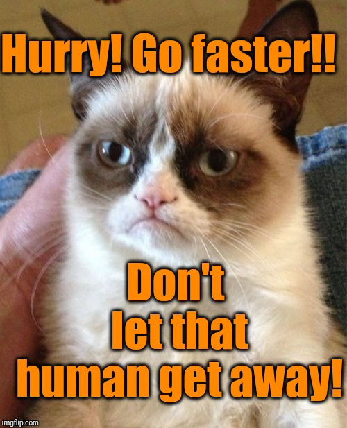 Grumpy Cat Meme | Hurry! Go faster!! Don't let that human get away! | image tagged in memes,grumpy cat | made w/ Imgflip meme maker