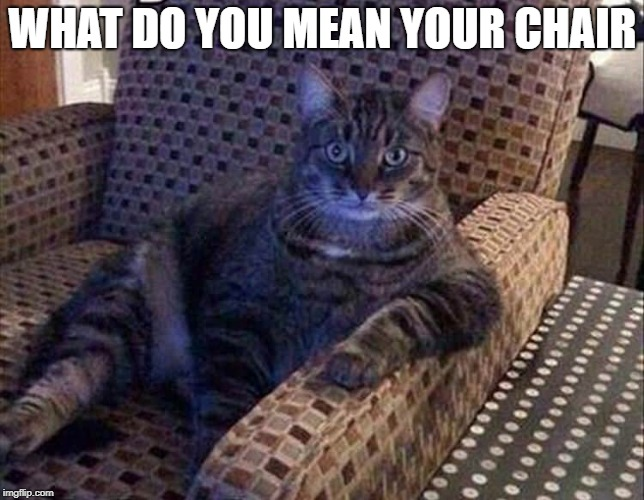 i don't see your name on it  | WHAT DO YOU MEAN YOUR CHAIR | image tagged in cat,easy chair | made w/ Imgflip meme maker