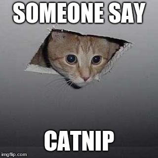 Ceiling Cat | SOMEONE SAY CATNIP | image tagged in memes,ceiling cat | made w/ Imgflip meme maker