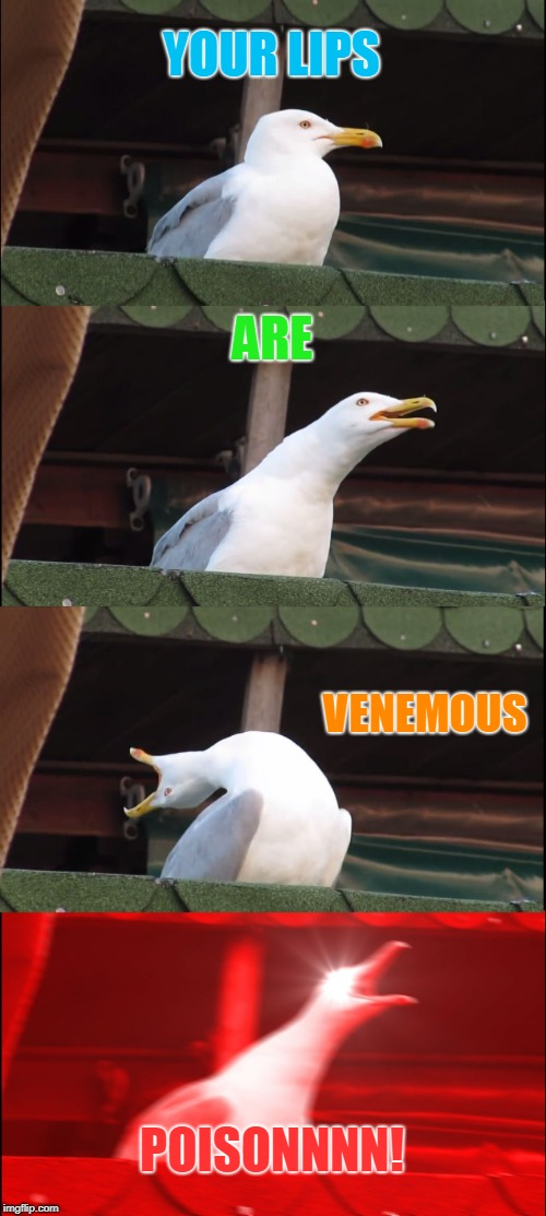 Don't mine me. Just showing my age.  | YOUR LIPS ARE VENEMOUS POISONNNN! | image tagged in memes,inhaling seagull,nixieknox,alice cooper | made w/ Imgflip meme maker