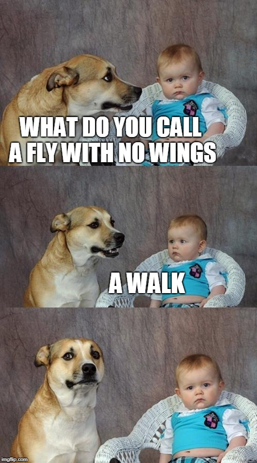 Dad Joke Dog Meme | WHAT DO YOU CALL A FLY WITH NO WINGS A WALK | image tagged in memes,dad joke dog | made w/ Imgflip meme maker