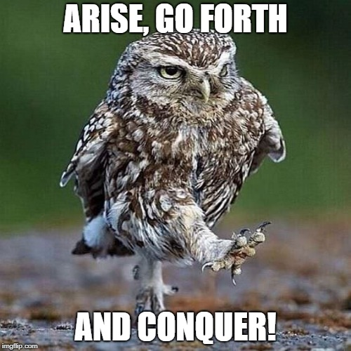 Owl Walk | ARISE, GO FORTH AND CONQUER! | image tagged in owl walk,arise,conquer,win | made w/ Imgflip meme maker