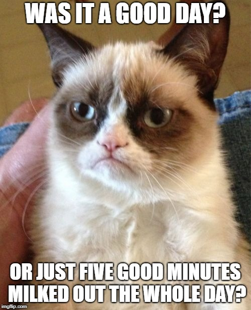 Grumpy Cat Meme | WAS IT A GOOD DAY? OR JUST FIVE GOOD MINUTES MILKED OUT THE WHOLE DAY? | image tagged in memes,grumpy cat | made w/ Imgflip meme maker