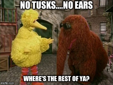 big bird wants to know | NO TUSKS....NO EARS WHERE'S THE REST OF YA? | image tagged in memes,big bird and snuffy | made w/ Imgflip meme maker