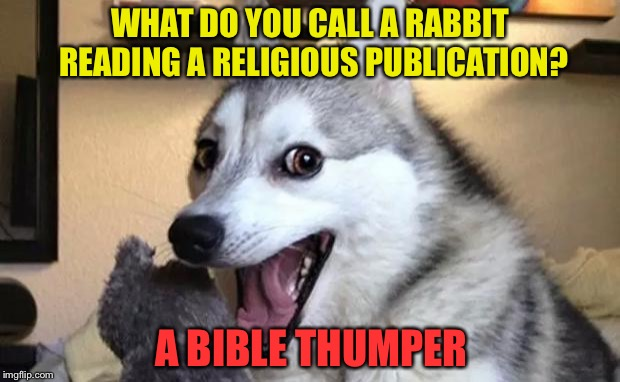 Who's that knocking at my door? | WHAT DO YOU CALL A RABBIT READING A RELIGIOUS PUBLICATION? A BIBLE THUMPER | image tagged in pun dog - husky,religion,memes,funny | made w/ Imgflip meme maker