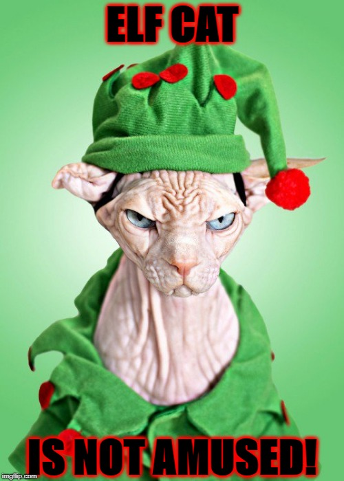 ELF CAT IS NOT AMUSED! | image tagged in elf cat | made w/ Imgflip meme maker